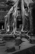 roots_at_taprohm